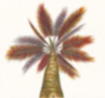 PalmFire ColorCropped.jpg