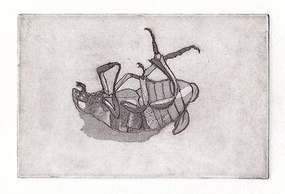 Vuln Beetle.jpg