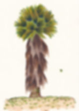 Regal Palm.jpg
