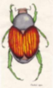 Washi Beetle 1.jpg