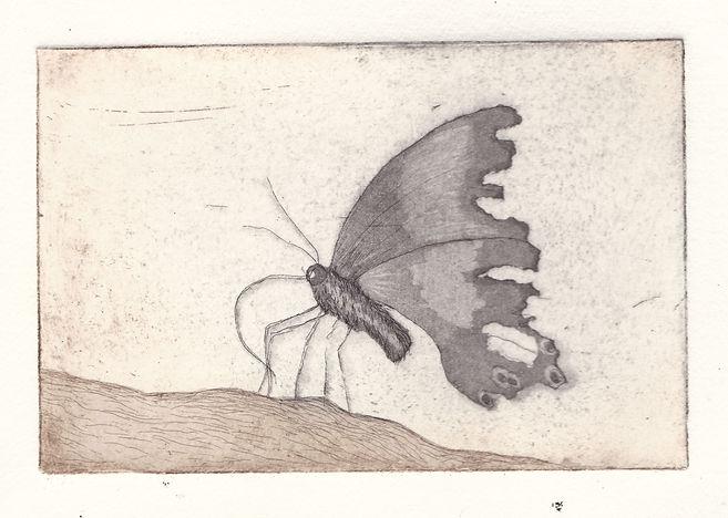 tattered butterfly_sepia.jpg
