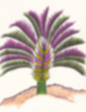 Triangle Palm.jpg