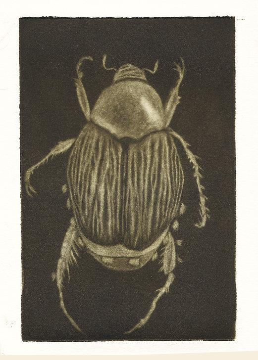 Mezzo Beetle.jpg