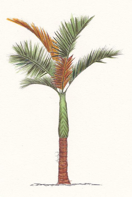 Orange Palm.jpg