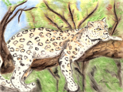 """Leopard Chillin' in a Tree"""