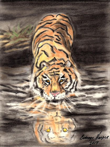 """""""Tiger in the Night"""""""