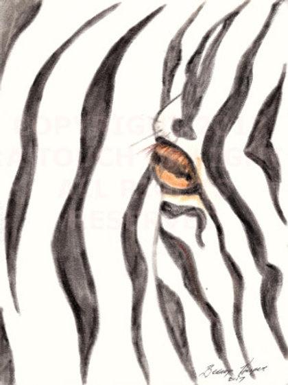 """""""Zebra in the Wild"""""""