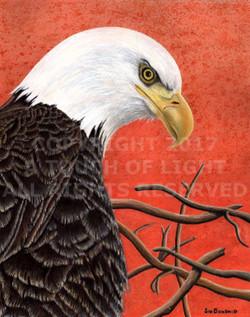 """American Eagle"""