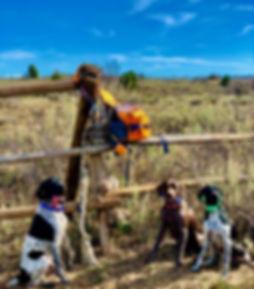 Sharptail hunt 2019.jpg