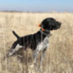 Teton Hunting 2018.JPG