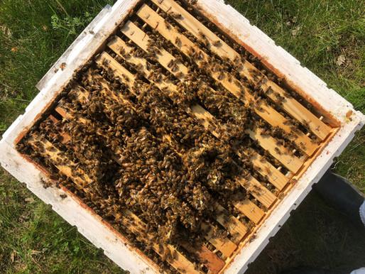 Våra egna bin i solen!