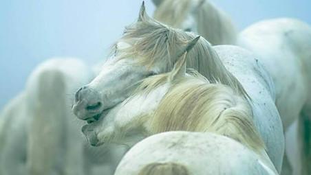 Des chevaux