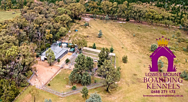 Lowes Mount Boarding Kennels Oberon NSW 4