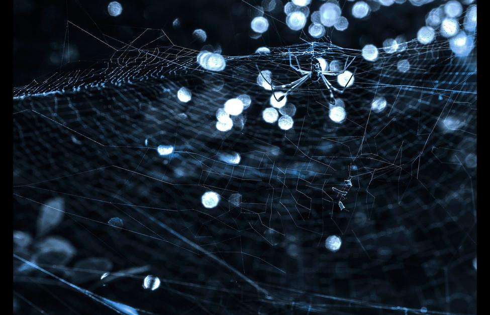 spider_book_page_04.jpg