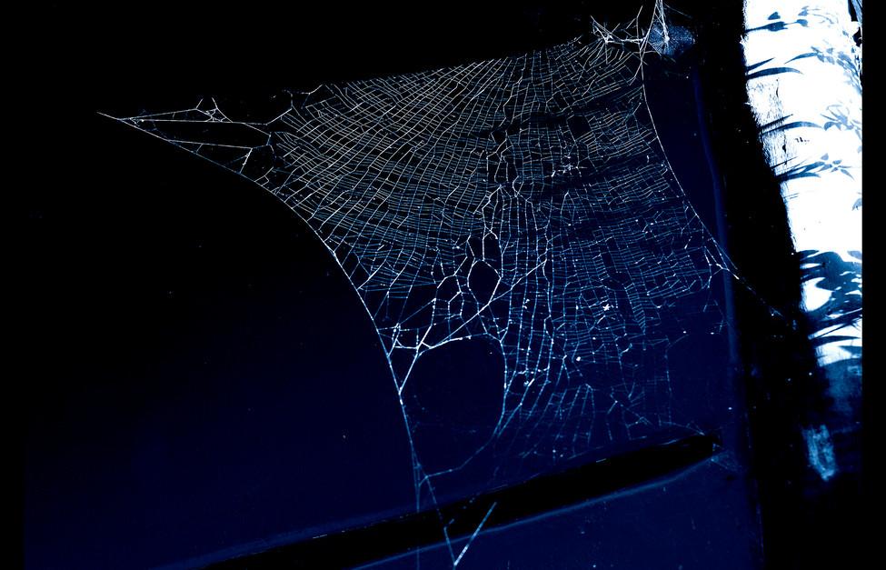 spider_book_page_19.jpg