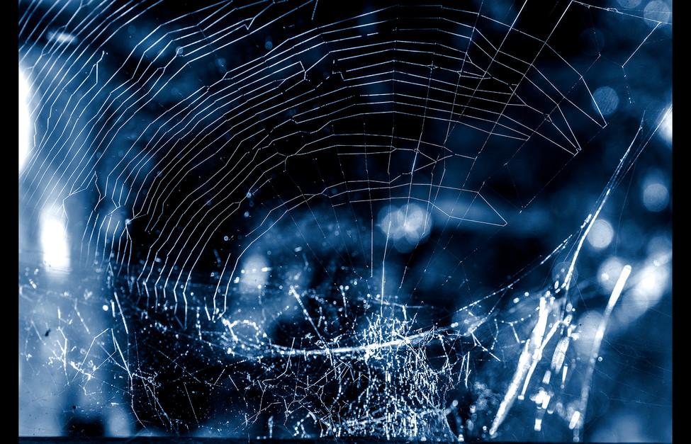 spider_book_page_01.jpg