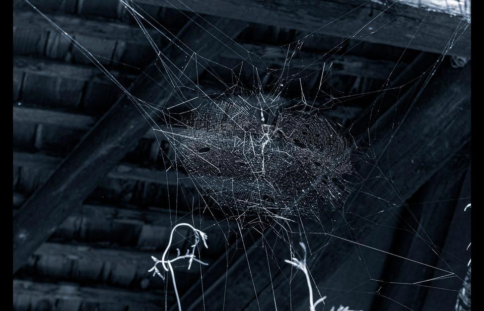 spider_book_page_22.jpg