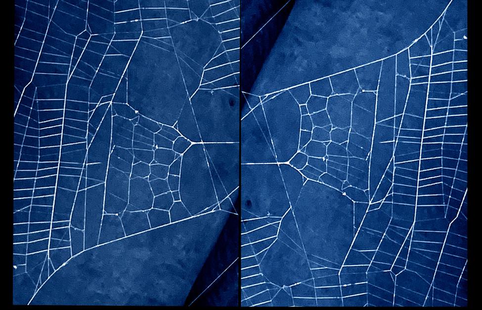 spider_book_page_18.jpg
