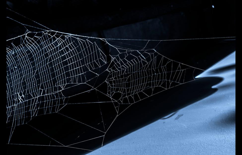 spider_book_page_17.jpg