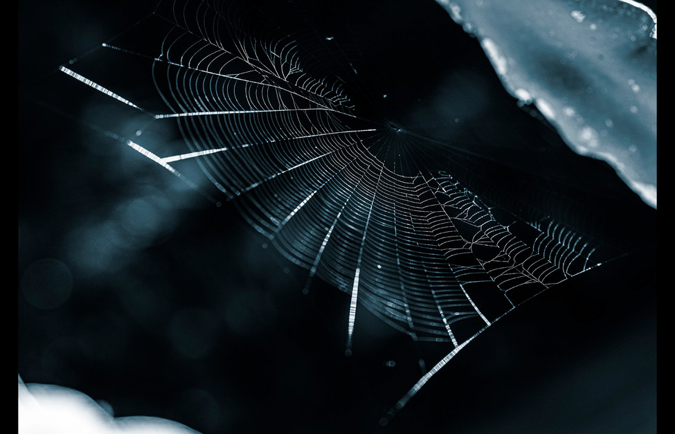 spider_book_page_20.jpg