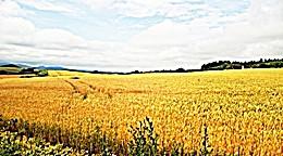 """名曲千夜一夜物語-631~""""Fields of Gold""""-Sting-1993"""