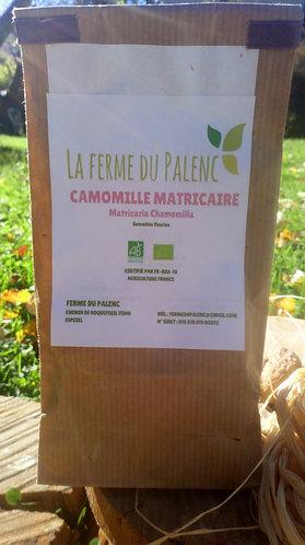 Camomille matricaire (matricaria chamomilla)