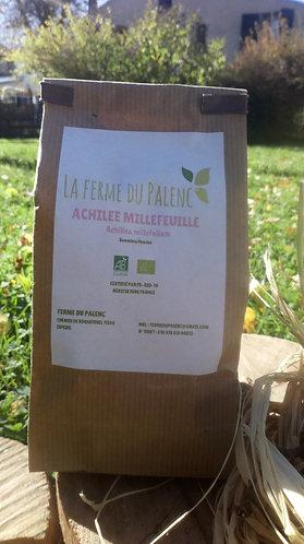 Achilée millefeuille (Achillea millefolium)