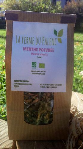 Menthe poivrée (mentha piperita)