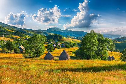 transylvanian meadow.jpg