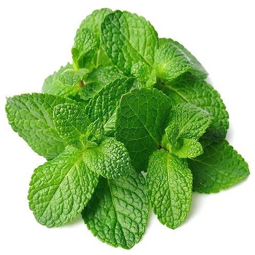 pudina / mint leaves
