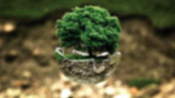 environmental-protection-683437_640.jpg