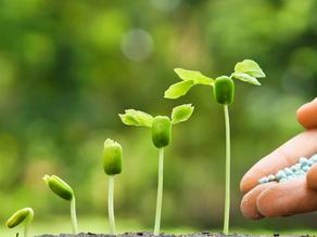 Grow Your Financial Garden