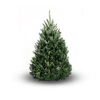 A Fraser Fir Christmas Tree for sale in the Glasgow area