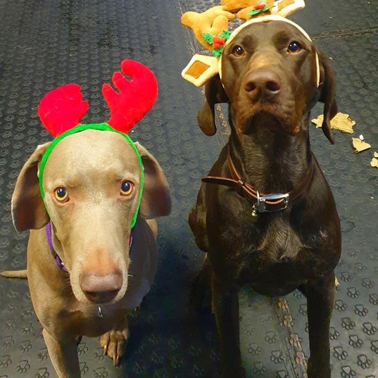 Christmas Dressup