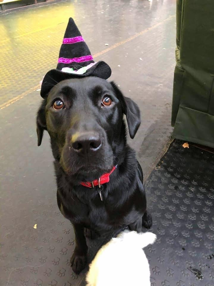 Halloween Dressup