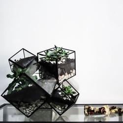 küpler geometrik teraryum fanus