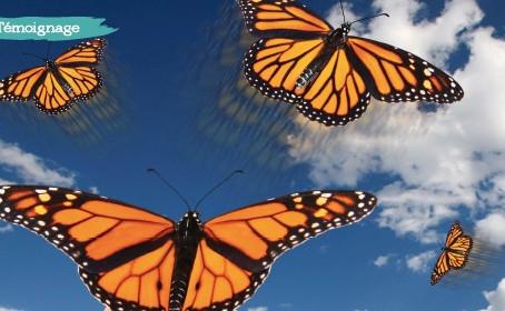 Ce que la chenille appelle fin du monde, le reste du monde l'appelle papillon [Lao Tseu]