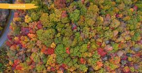L'automne saison du poumon et des infections respiratoires