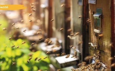 La ruche et ses trésors