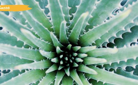 Jus d'Aloe Vera - Le meilleur soin pour l'estomac et les intestins