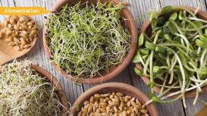 Les graines germées, l'aliment vivant par excellence