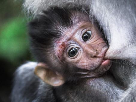 Sacred Monkey Forest – Ubud, Bali