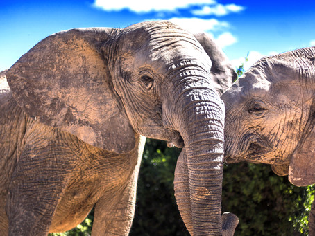 The World's only Big 7 Game Reserve - Addo Elephant National Park
