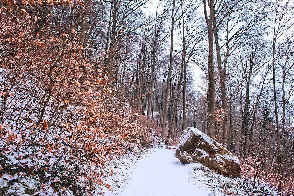 Mullerthal Trail   Luxembourg   Image by Chantelle Flores