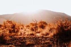 Pilanesberg National Park_16
