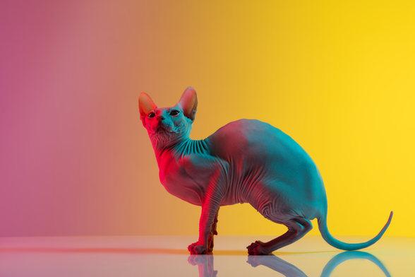 cute-sphynx-cat-kitty-posing-isolated-wa