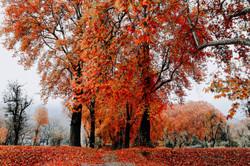 Fall in Kashmir 9