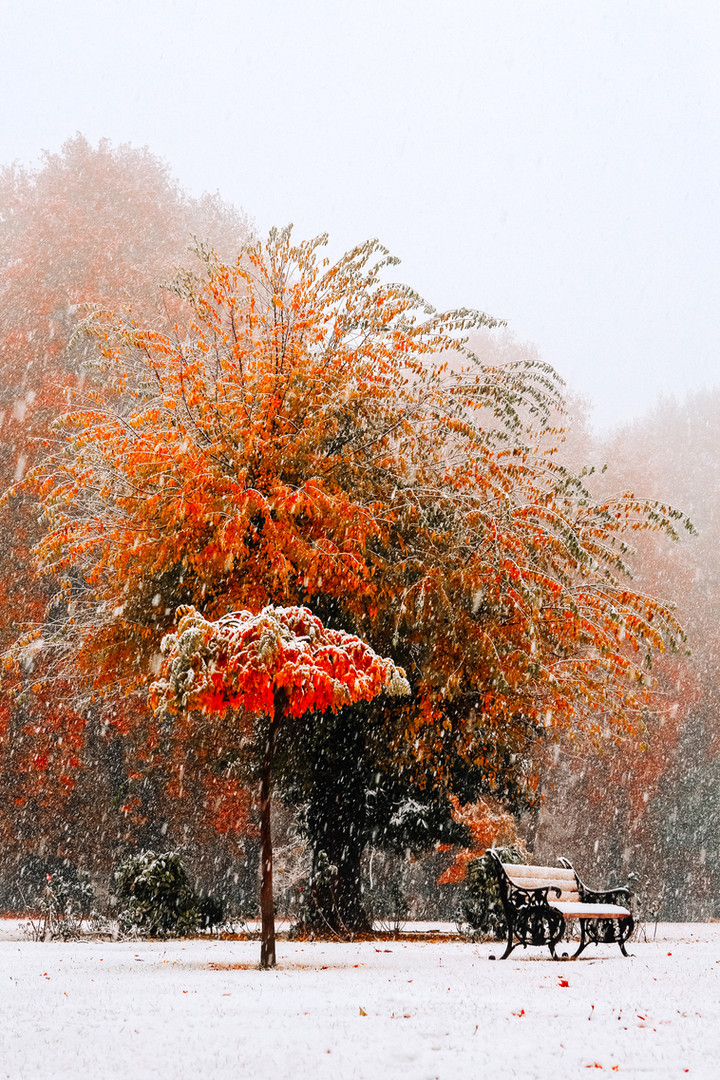 Fall in Kashmir 74.jpg