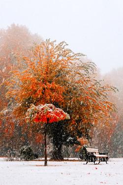 Fall in Kashmir 74