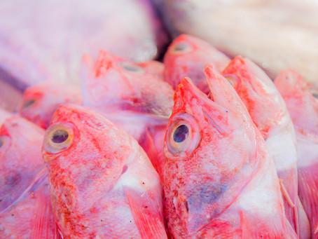 Open Air Fish Market - Essaouira